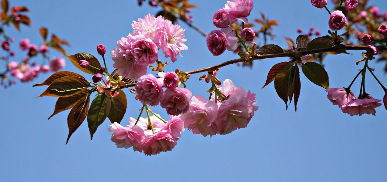 Kevät Roomassa