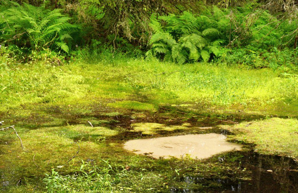 Pulppuava lähde Lauhanvuoren kansallispuistossa