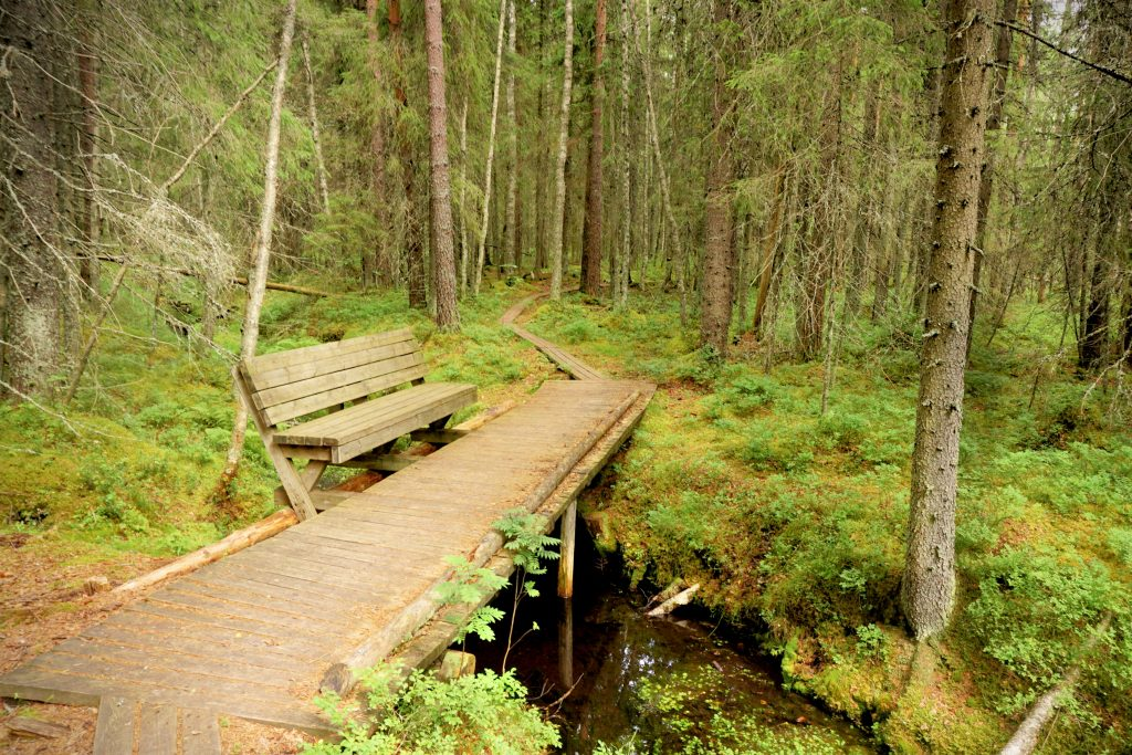 Levähdyspaikka yhdella Lauhanvuoren kansallispuiston puron äärellä