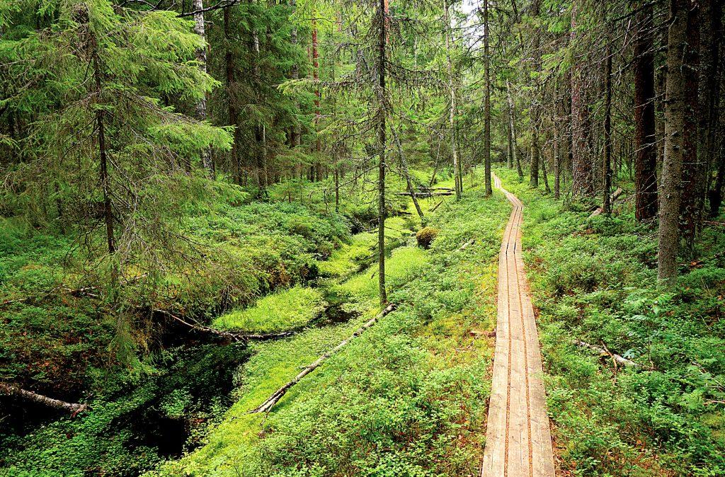 Lauhanvuoren kansallispuiston vihreyttä.